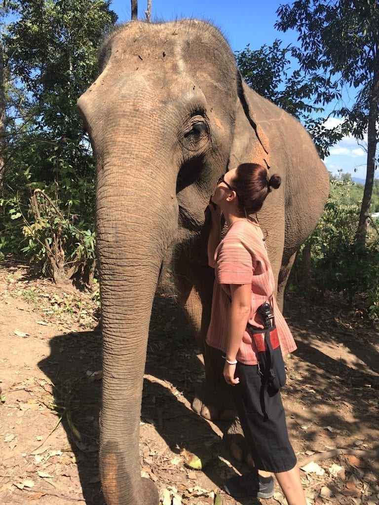 Elephant Sanctuary In Chiang Mai