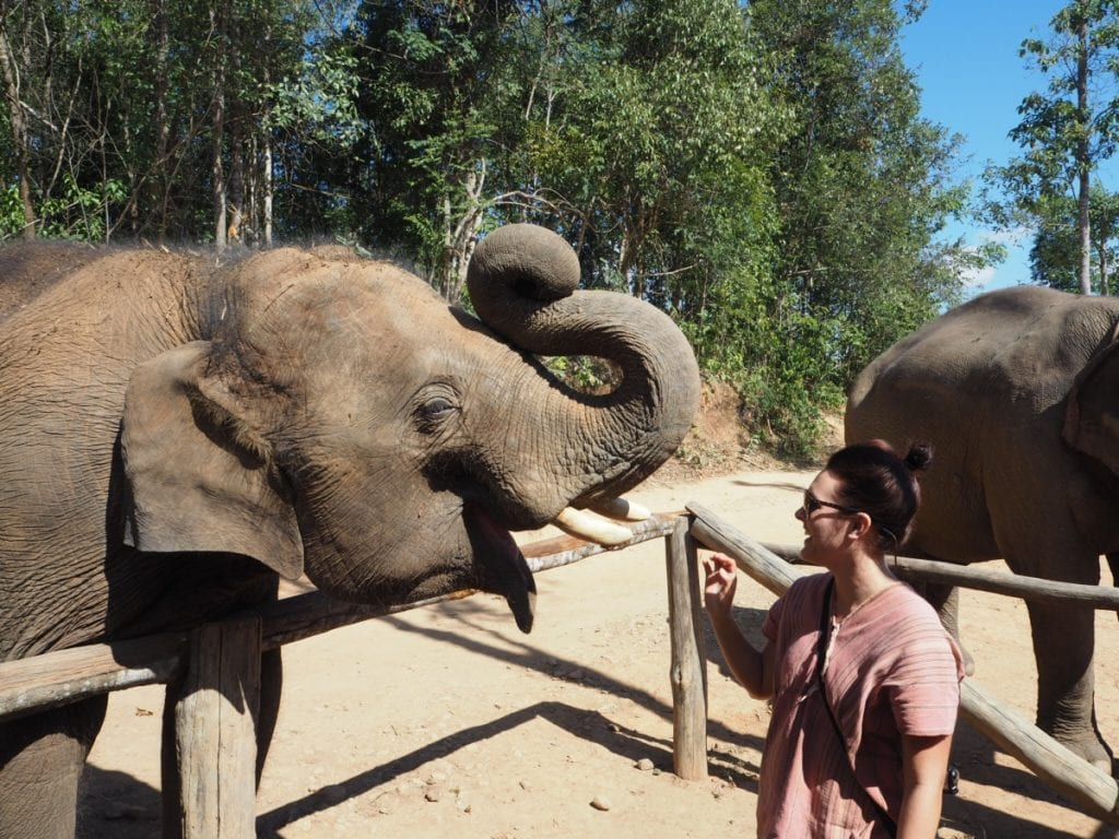 feeding elephants at an elephant sanctuary in Chiang mai