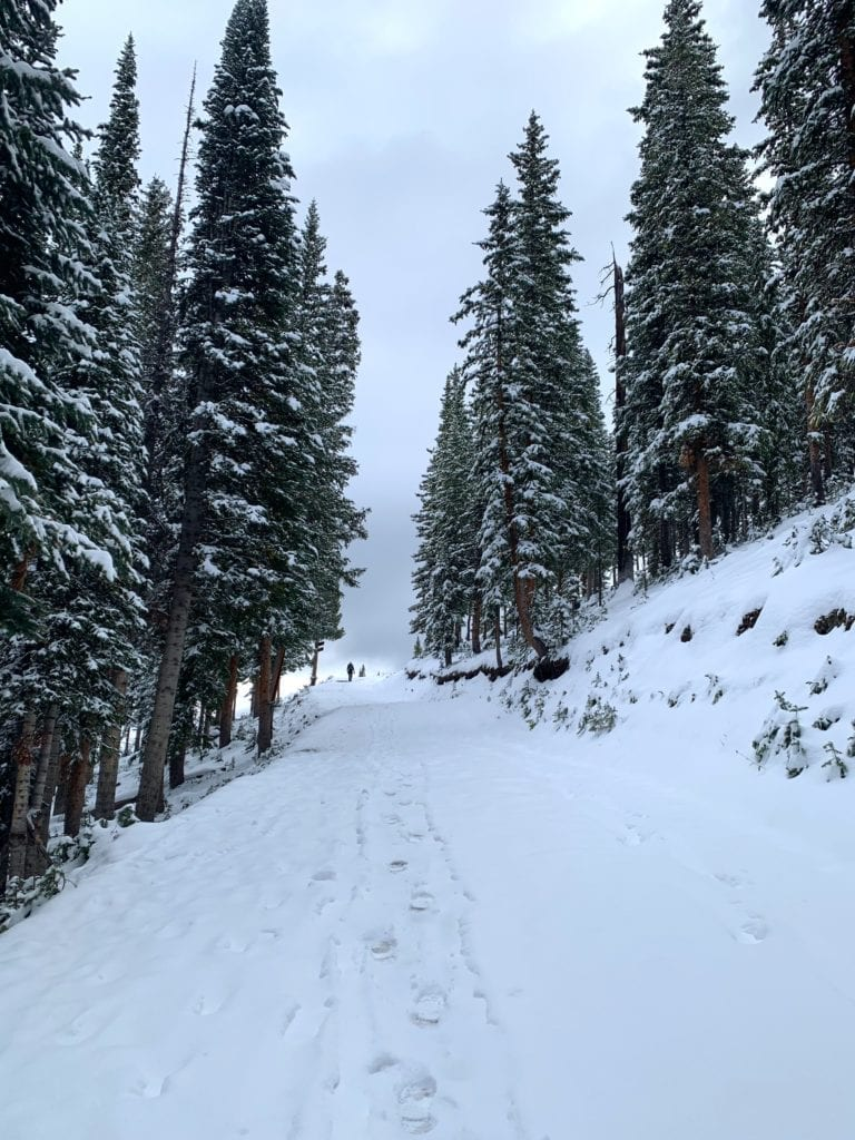 Snowy forest Telluride hikes