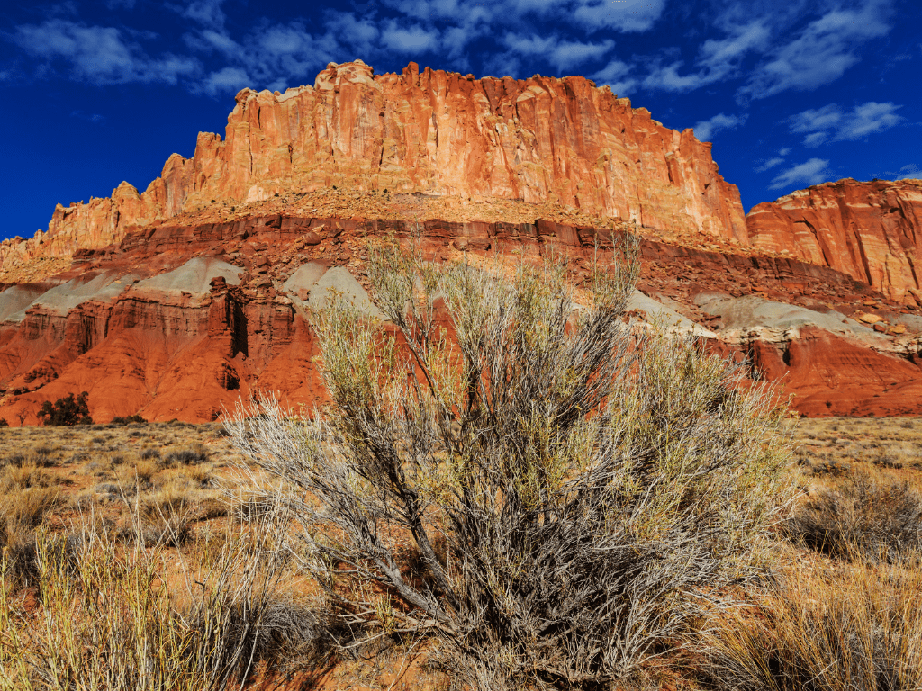 Capitol Reef National Park Landscape